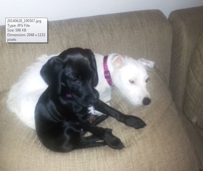 Zoey (black) and Isla (white)